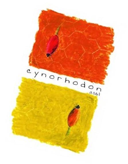 Cynorhondon
